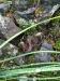 newt friend